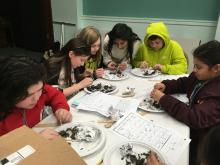 STEM Owl Pellets